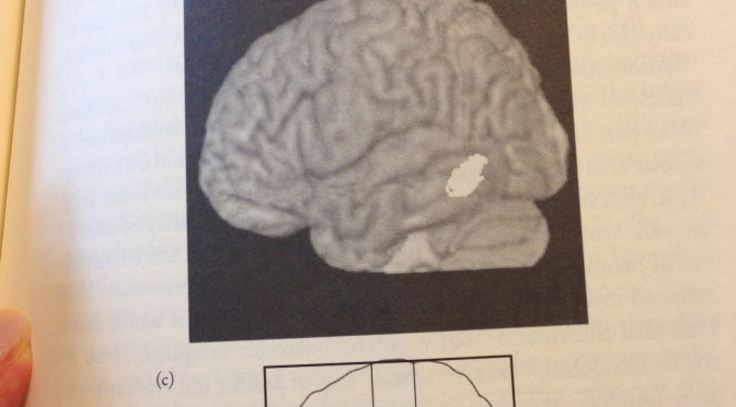 neuroscience, breinleren